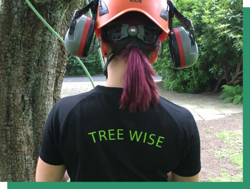 Image of Tree Wise staff member preparing to inspect a tree