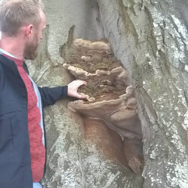 image of Treewise staff inspecting a tree
